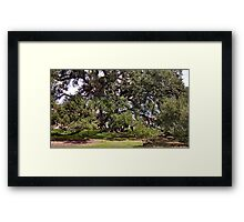 Wild Tree Full View Framed Print