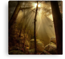 Late afternoon, Mount Buffalo Canvas Print