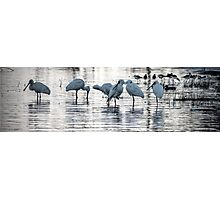 Bird Life Photographic Print