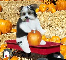 I Can Just Taste This Pumpkin Now..( CUTE-CANINE IN WAGON WITH PUMPKINS..) - PILLOW-TOTE BAG-JOURNAL-BOOKS-ECT.. by ✿✿ Bonita ✿✿ ђєℓℓσ