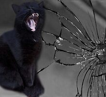 MEOWW-CAT'S BROKEN MIRROR -7YEARS BAD LUCK-NO - SUPERSTITION AIN'T THE WAY. by ✿✿ Bonita ✿✿ ђєℓℓσ