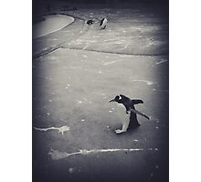 It's just a penguin Photographic Print
