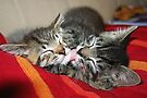 Kittens Sleeping Cuties by Jo Nijenhuis