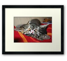 Kittens Sleeping Cuties Framed Print