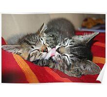 Kittens Sleeping Cuties Poster