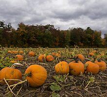 Getting Ready for Halloween by Georgia Mizuleva