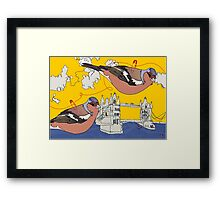 chaffinch urban Framed Print