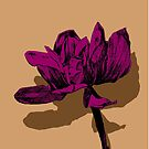 magnolia pink by andley