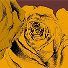 roses yellow by andley