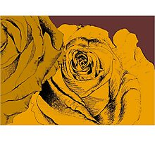 roses yellow Photographic Print
