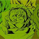roses green by andley