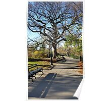 Tree in Central Park Poster