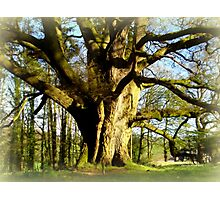 Mighty Ancient Tree  Photographic Print