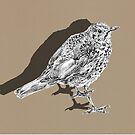 songthrush shadow by andley