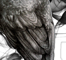 crow gothic bird raven realism drawing sketch tattoo Sticker