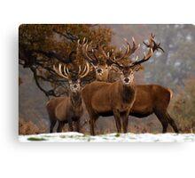 Family Portrait - Red Deer Canvas Print