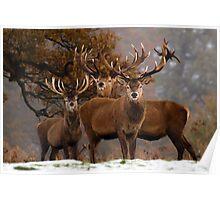Family Portrait - Red Deer Poster