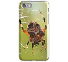 Orb Weaver Spider iPhone Case/Skin