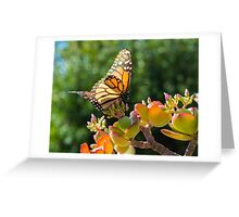 Monarch Butterfly on a Jade Plant Greeting Card