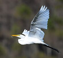 great egret with small frog by Susan Ellison