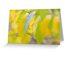 Lemon Lime Greeting Card