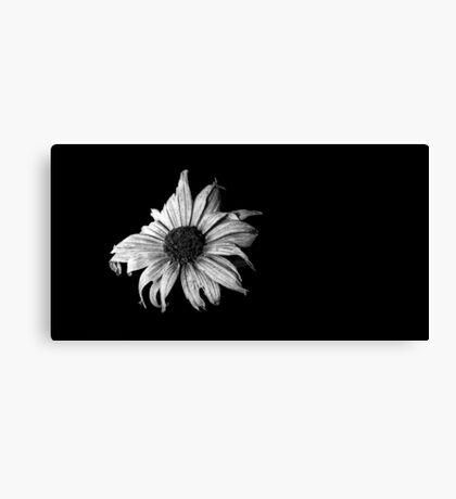 Dark daisy Canvas Print
