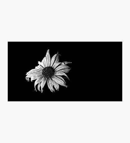 Dark daisy Photographic Print