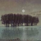 misty moonlight trees and reflections by R Christopher  Vest