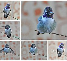COLLAGE OF WHITE EARED HUMMER ON YUCCA REED by JAYMILO