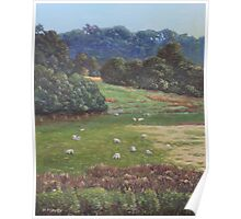 Sheep in a field in the Devon countryside Poster