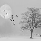 Snow Geese In The Snow by TOM YORK