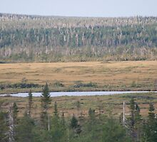 photography of forestry in Nova Scotia by Vujovich44