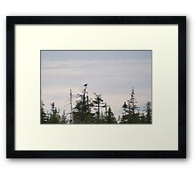 photography of forestry in Nova Scotia with an Eagle Framed Print