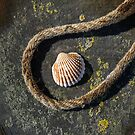 Shell and Rope by Dave Hare