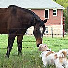 Molly and the Horse by BCallahan