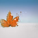 Autumn flakes by Lyn Evans