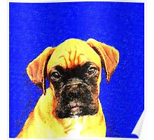 Boxer dog in blue Poster