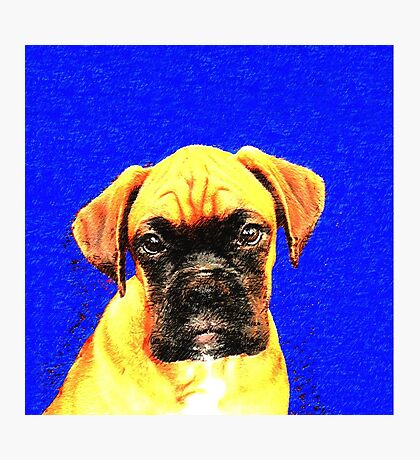 Boxer dog in blue Photographic Print