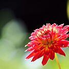 Flower by Carrie Bonham