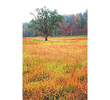 AUTUMN MEADOW,CADES COVE Photographic Print