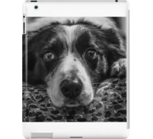 intense look of a border collie iPad Case/Skin