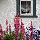 Lupins Beneath a Rustic Window by Edward A. Lentz