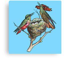 Hummingbirds on Nest  Canvas Print