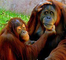 Sumatran Orangutan by Barnbk02