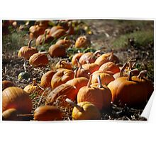 Row of Pumpkins Poster