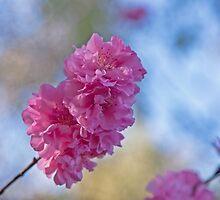 Blossom Bokeh by jayneeldred