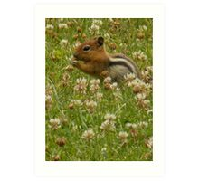 Squirrel Among the Clovers Art Print