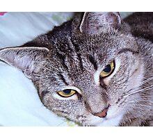 tigger-my tabby cat Photographic Print