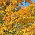 Autumn 2 by Carolyn Clark