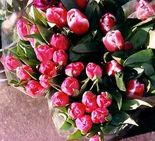 tulips at a flower shop,berkeley by califpoppy65